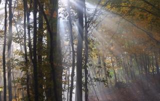 hmly_v_karpatskom_lese