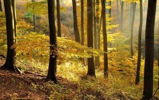 jesen_zima_jar_v_bucine