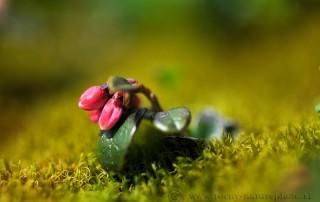 kvety-schneeberg3