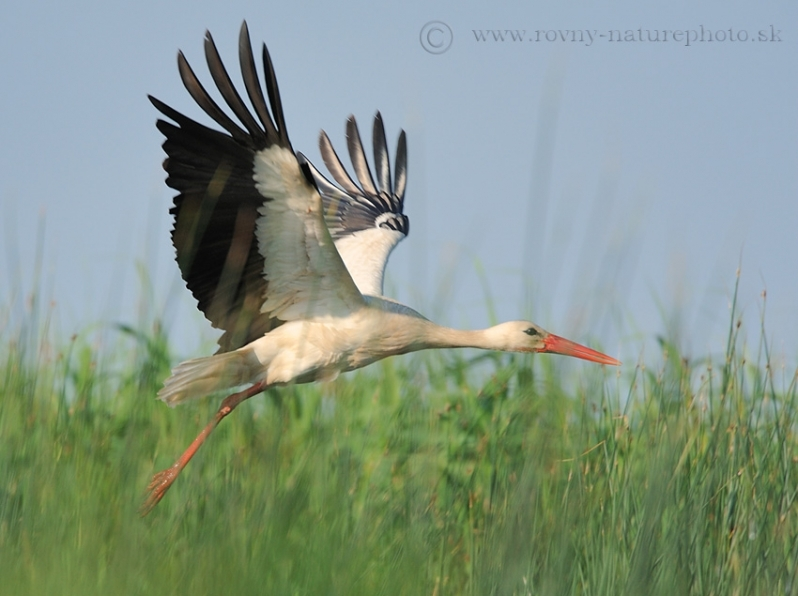 Veľká korisť a veľké vtáky