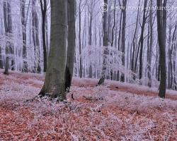 Červená v lísti pri nohách stromov svieti poslednými farbami jesene a biela v korunách sa ligoce prísľubom zimy.