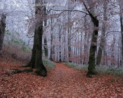 Cold come to the forest by the red carpet of beech leaves, decorate green curtains of grass and sprinkle tree branches.