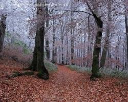 Chlad vstúpil do lesa po červených kobercoch bukového lístia, prikrášlil zelené záclony tráv a pocukroval konáre stromov.