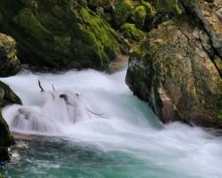 Clear water of Radovna river / Vintgar /
