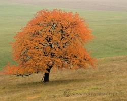 Je tu koniec októbra, čerešne nás objímajú ohnivými farbami.
