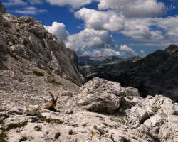 Ibex and his kingdom as far as the eye can see