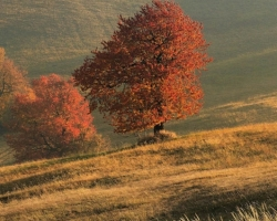Whisper of dry grass, cherries fiery leaves rustle, long shadows drawing its paintings over the hills. These are stunning paintings of autumn mornings in the White Carpathians.