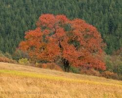 Na stráňach Bielych Karpát prevládajú tóny žltej, hnedej a červenej. Len smrekový les si ponechal svoju skromnú zelenú.