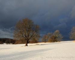 Popod olovené mraky prekĺzol po bielych stráňach slnečný lúč. Ovinul smutné stromy v zlatom objatí s prísľubom že na jar tu bude zas.