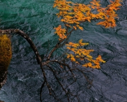 Zo skál kaňonu nad modrými vodami rieky Abeskoaetnu trčali ako horiace fakle jarabiny.