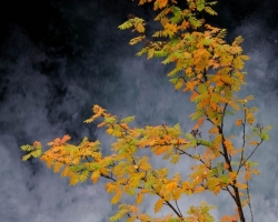 Rumbling water, water vapor, rowan colors and sunshine dominated the picture.