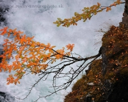 Rock sprinkled with gold birch leaves and fiery rowans decorate the canyon walls in Abisko National Park.