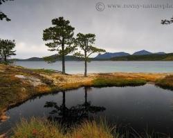 Fotografia zachytáva tmavú vodu drobného jazierka v kamennej priehlbni na brehoch fjordu, kde stekajú po kvapkách tmavé výluhy nasiaknutých pôd a odrážajú sa siluety borovíc.