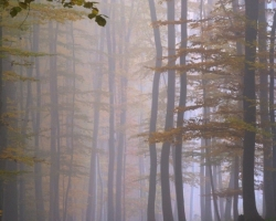 Forest silence