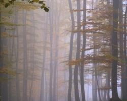 S príchodom jesenných hmiel sa v lese rozhostilo zádumčivé ticho.