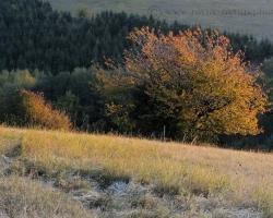 Oheň v listoch a ľad pri nohách, to je kontrast a rovnováha chladných jesenných rán.