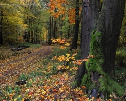 Melancholy of autumn trails in the Male Karpaty mountain