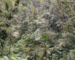 Amazing the variety of plants and their shapes in tropical forest on the island of Saint Vincent.
