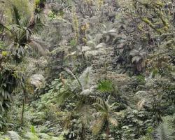 Úžasná je pestrosť rastlín a ich tvarov v tropickom lese na ostrove Saint Vincent.