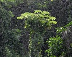 Hot sun and rain wear everything in lush greenery.