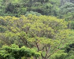 Džungľa je zelená a predsa pestrá. Žiari všetkými odtieňmi zelenej.