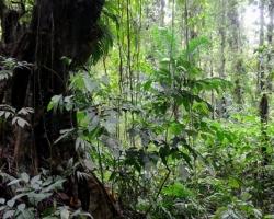 Na spodných poschodiach je v džungli málo svetla. Len keď spadne niektorý z obrov, uvolní svetlo a poskytne šance ďalším.
