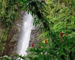 Kvety,mokrá zeleň, spev padajúcej vody taký je vodopád Dark View Falls.