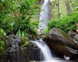 V rokline vodopádu je vodou nasýtené všetko. Kotúľajú sa kvapky po listoch kameňoch lianach lícach aj vlasoch. Zelená už nemôže byť zelenšia a odvšadiaľ poskakujúca voda veselšia.