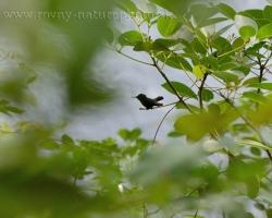 Drobné zrnko zelenej džungle Karibiku