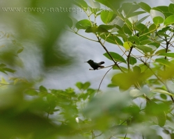 Tiny grain of green carobbeam jungle.