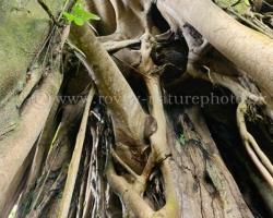 Korene korene, koľko nádhery - symbolov.
