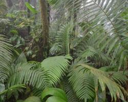 Veselo poskakujú tvary listov paliem a papradí v podraste tropicej džungle.