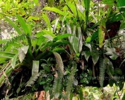 Fully occupied, report bromeliads ferns and vines all those leaves sticking out of the branches.