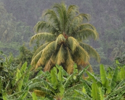 Kvapky dážďa strieda horúce slnko - zavlažuje zahrieva.