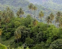 Majestátne sa pohupujú palmy na dlhých dutých pňoch nad tropickou vegetáciou.