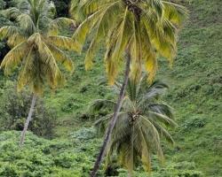 Koľko krásy a majestátnosti je v týchto nádherných rastlinách.