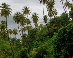 Na okrajoch políčiek je rastlinstvo džungle pripravené zaujať stratené pozície.