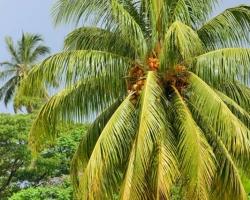 Palmy to vonia slobodou, dovolenkou. Hm dá sa však prísť aj na to, že aj duby, buky, hraby, brezy a všetky naše stromy voňajú rovnako.