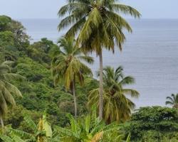 Palmy banány zeleň a more taký je pre mňa Karibik.