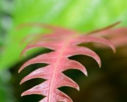 Rôznotvaré a farebné listy papradí patria neodmysliteľne k ostrovu Saint Vincet.