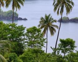 Často mi palmy pripomínali hliadky vítajúce morské vlny.