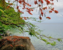 Look underneath the beautiful flamboyant tree to bay in the Caribbean Sea.