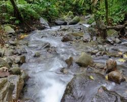 Cestou od vodopádou prechádzame malý potôčik, ktorý si žblnká svoju nôtu pod zeleným baldachýnom tropického lesa.
