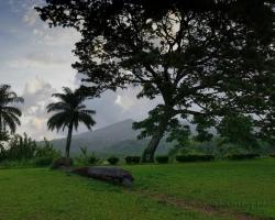 Stromy stromy vysoké tropické dámy rád sa na Vás pozerám