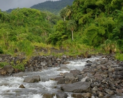Quickly diverting river water from the jungle, which is strained daily from clouds to tropical rainforest.
