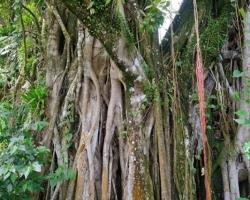Nádherný je mohutný strom v dźungli. Je ako prírodné mesto ako sídlo múdrosti džungle.