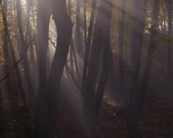 Slnko sa len zťažka predieralo hustou hmlou aby zvýraznilo farby bukového lesa