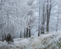 Beautiful, fabulous and a little sad at the same time are the silver paths throgh carpathian meadows.