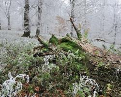 Keď lesný obor položí svoje telo, huby machy a stovky organizmov završujú nekonečný kolobeh života.