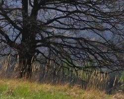 Konáre sú zvláštne. Každý strom ich má podobne ako my ľudia ruky iné. Sú fascinujúce.
